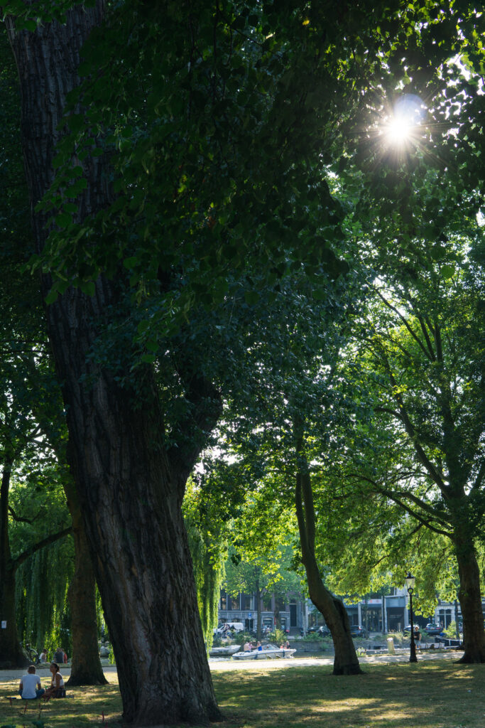 summer picnic in Amsterdam park