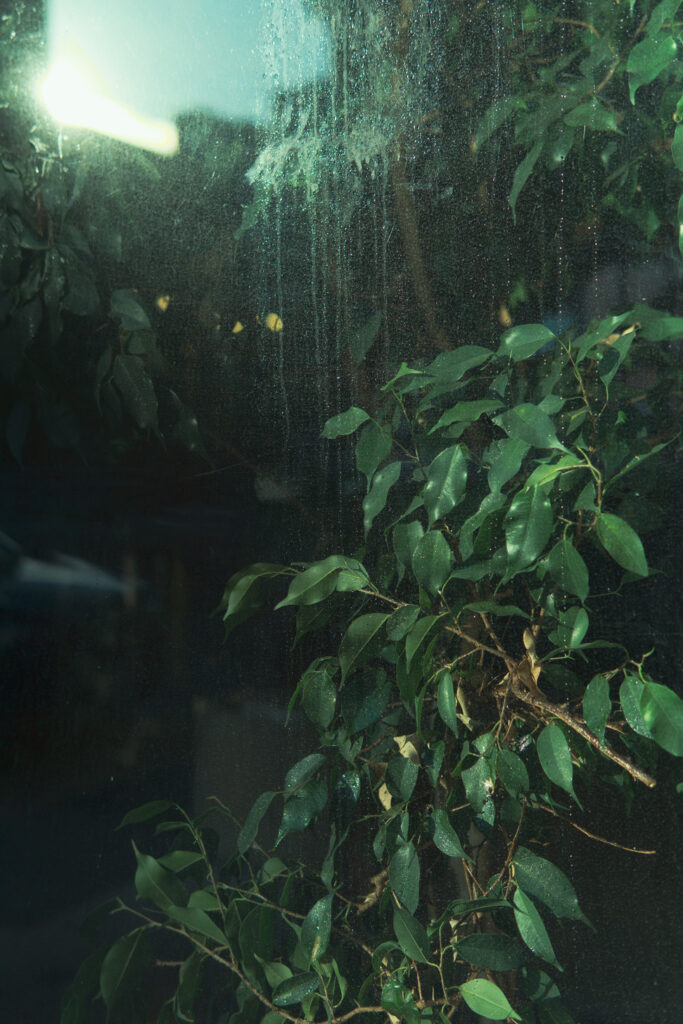 green plant seen through a window