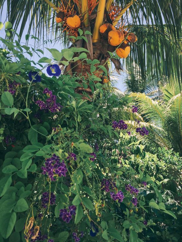 Caribbean jungle of flowers
