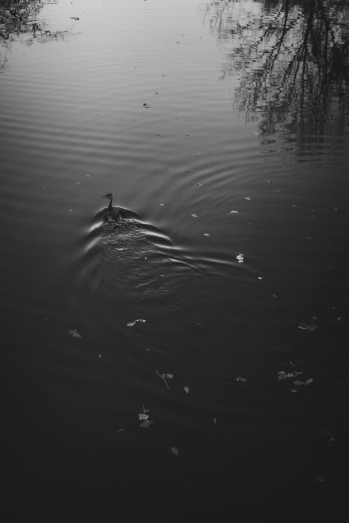 a duck floating on a canal