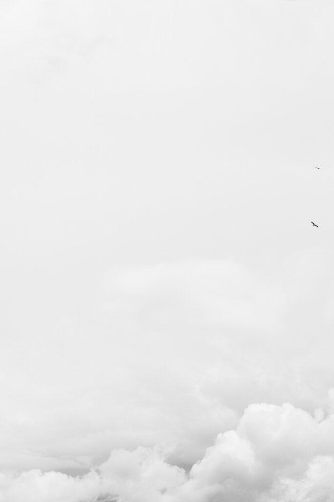 heaven and birds