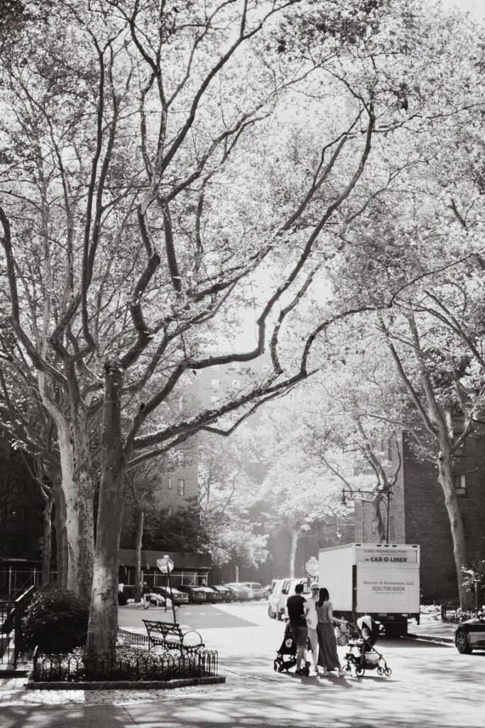 sun shining through tall trees in Stuy Town, New York